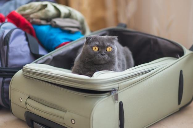 가방이나 가방에 앉아 여행을 기다리는 고양이. 애완 동물 개념으로 여행하십시오.