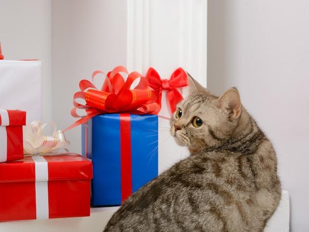 Cat sitting near christmas presents