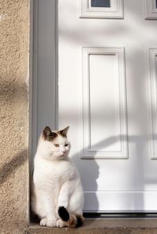 Кошка сидит возле двери на солнце