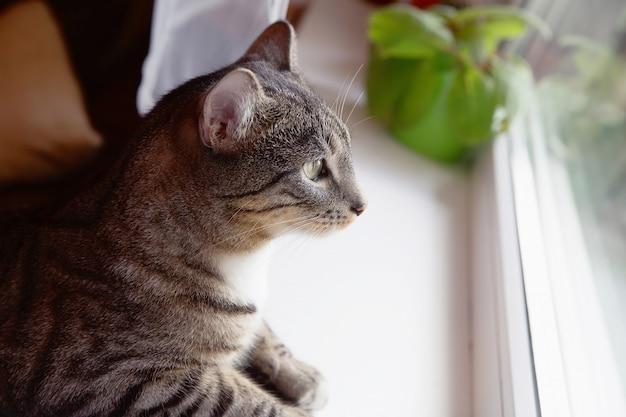창 옆에 앉아 고양이