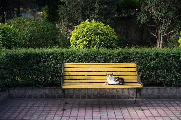 Кошка сидит на скамейке