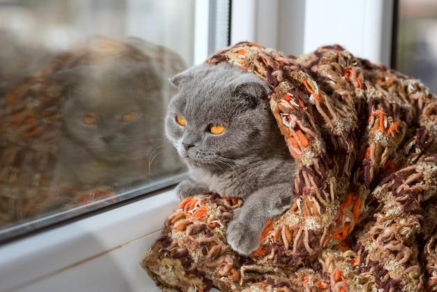 Кошка сидит на окне в платке и смотрит вдаль