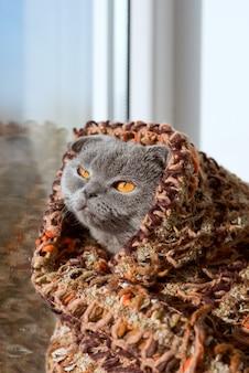Кошка сидит на окне в платке и смотрит вдаль Premium Фотографии