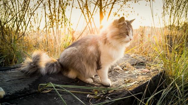 Кошка сидит на бревне у озера на рассвете