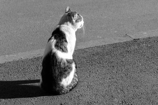道路に座っている猫。黒と白のストックフォト