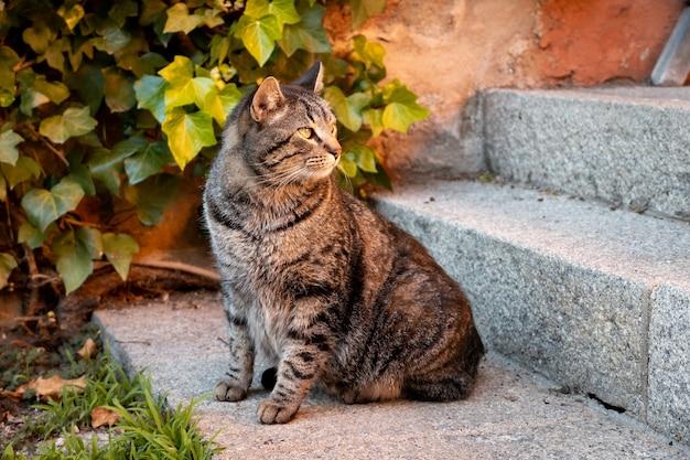 緑の植物の隣の建物の階段に座っている猫