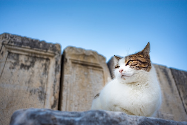 Cat sitting onthe ruins at ephesus ancient city