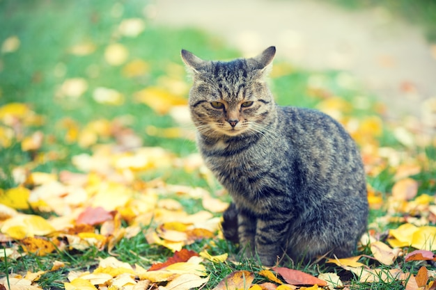 秋の落ち葉に屋外で座っている猫