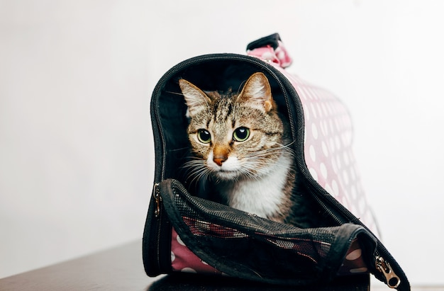 Cat sitting in a pet carrier