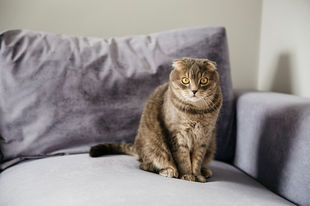 Cat sitting on sofa