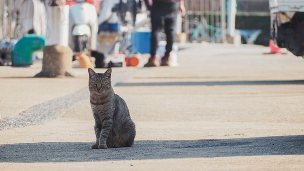 A cat sitting on the street near by the port