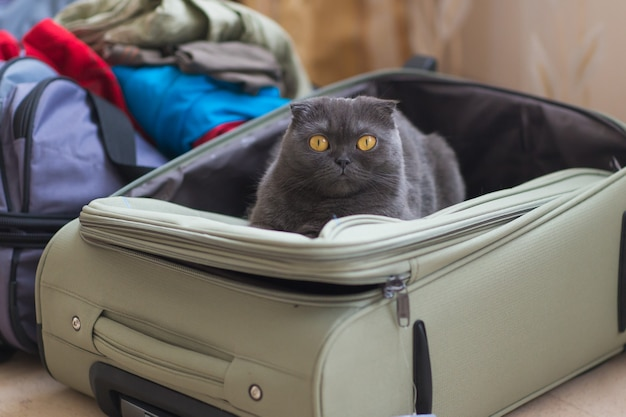 Cat sitting in the suitcase or bag and waiting for a trip. travel with pets concept.