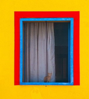 Cat sitting behind window of a colorful house painted with yellow, red and blue colors