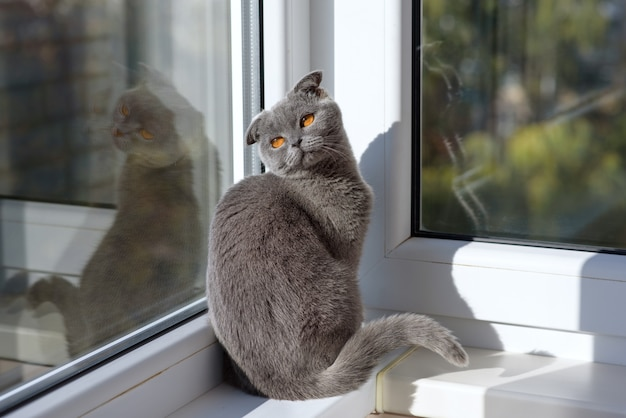 Cat sitting on a window in a scarf and looks into the distance