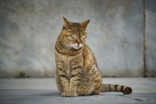 Кошка сидит с закрытыми глазами