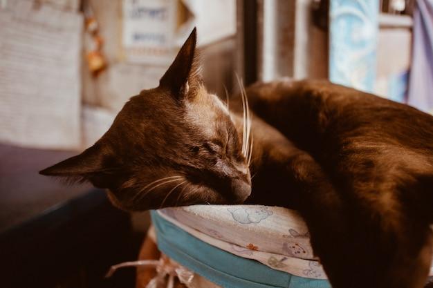 Кошка спит на мягкой подушечке, имея сладкий сон.