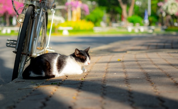 Cat sleep with bicycle.