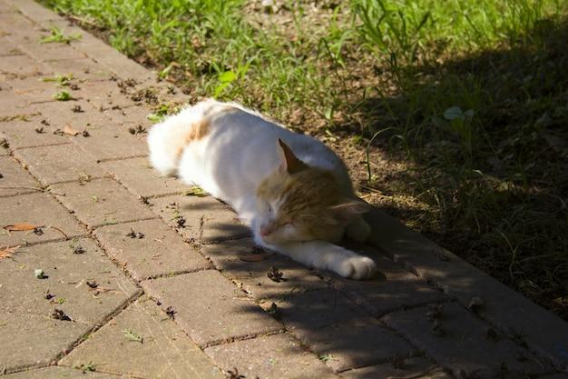 Кот спит в тени деревьев в солнечный летний день