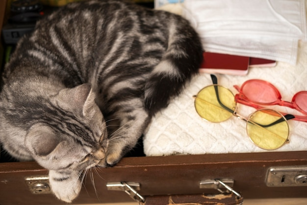 Cat sleeping in a luggage case high view