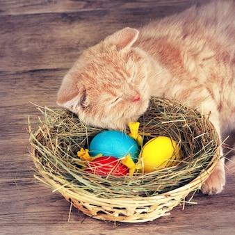 유색 계란 바구니 근처에서 잠자는 고양이