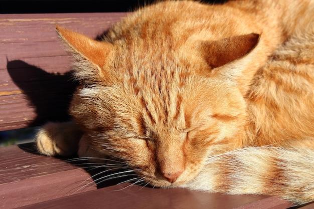 太陽の光の中でベンチで寝ている猫
