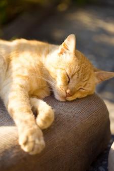 太陽光線の下で屋外で眠っている猫