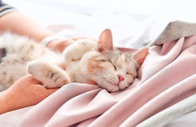 Кошка спит с лапой на белом одеяле
