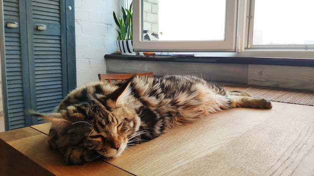 Cat sleeping on a wooden table in a kitchen
