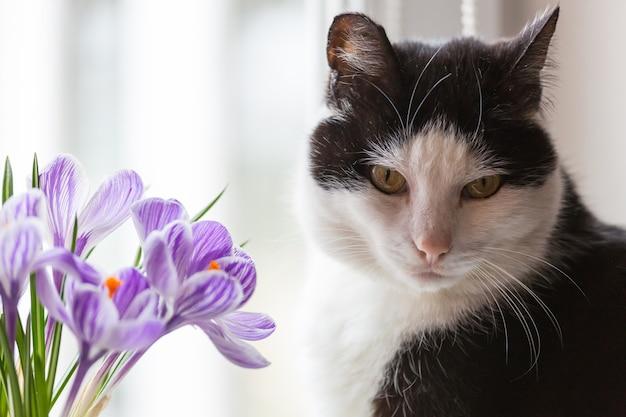 Кошка, пахнущая цветами