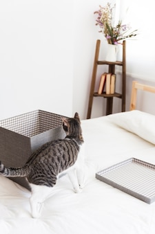 Cat sniffing box on bed
