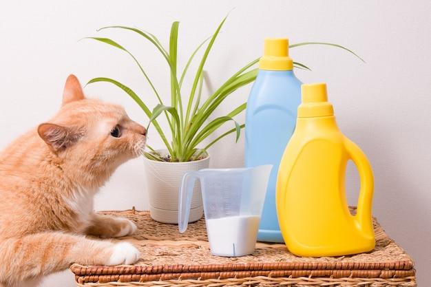Кошка нюхает цветок в плетеной корзине, стиральный порошок и гели для стирки детской одежды