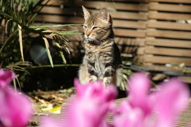 Кошка стоял, глядя в сторону