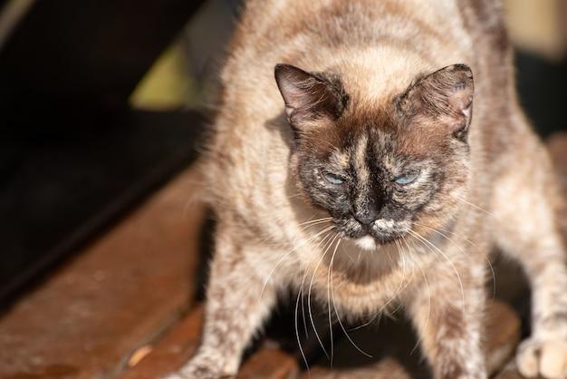 고양이, 아침 햇살에 누워 있는 길고양이. 자연광, 선택적 초점.