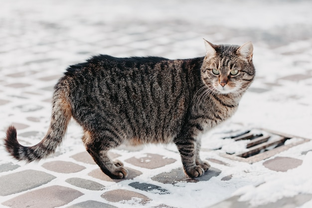 Cat on the street in winter