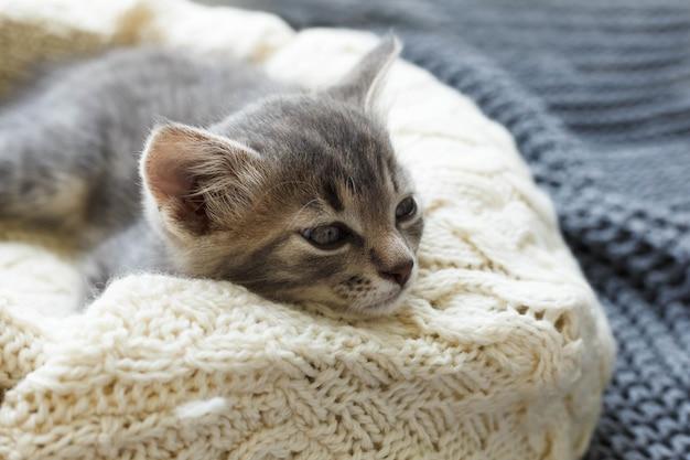 眠っている猫の縞模様のぶち子猫は、白いふわふわの毛布の上で丸くなります。