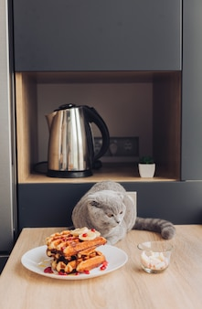 Cat on table with waffle