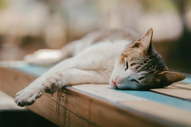 テーブルの森で寝ている猫タイ