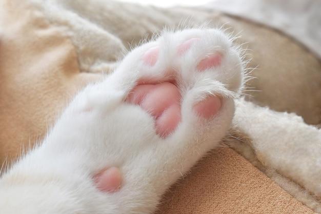 Кошачьи бобы на кошачьей кровати