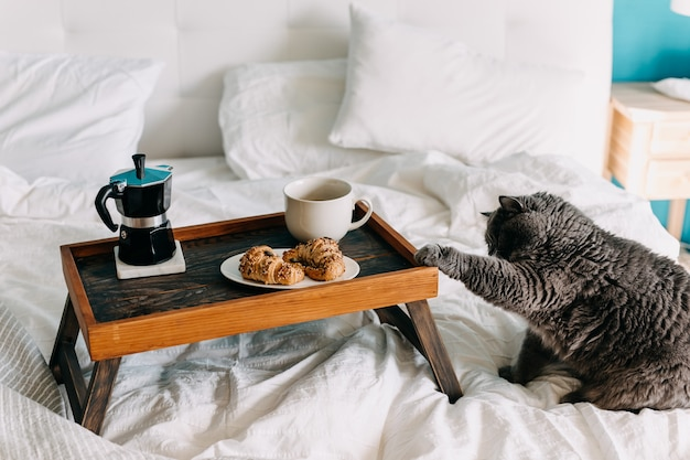 Cat touching a wooden tray with croissants and cup of coffee on bed