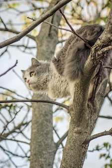 Cat on a tree branch in the forest