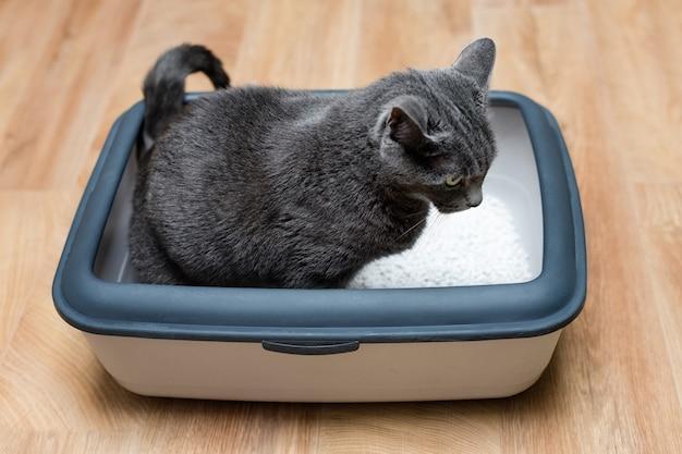 トイレを使用する猫、トイレの猫、排便または排尿のため、きれいな砂のトイレで排便します。