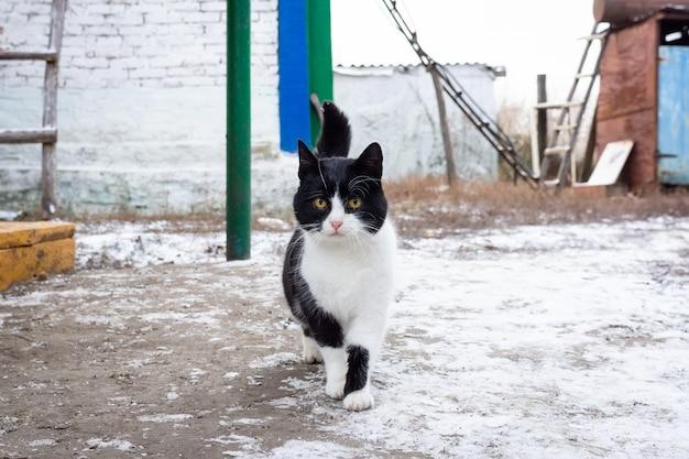 Cat village winter