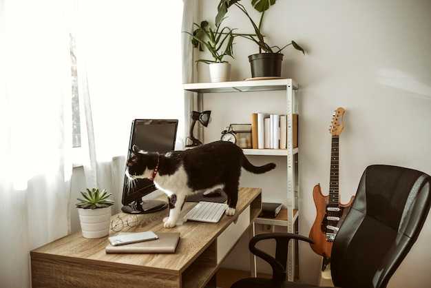 Cat walking on a desk indoors