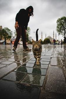 Cat walking down a street.