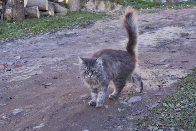 Кошка гуляет во дворе дома