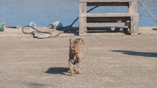 A cat walking on the street near by the port