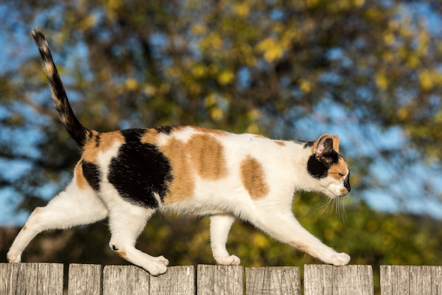 Cat walking on a wooden fence in the village