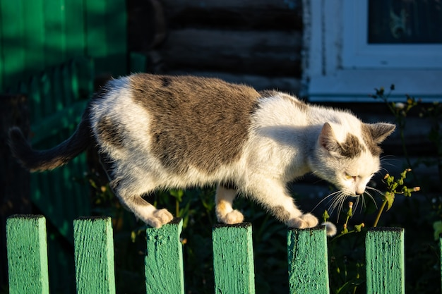 A cat walks along the edge of a fence on a summer day