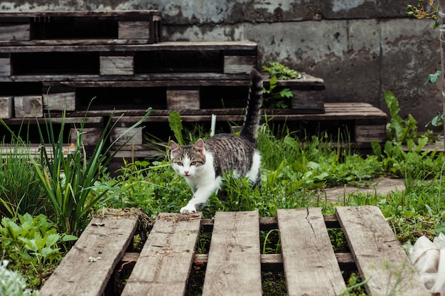 The cat walks along the path in the home garden