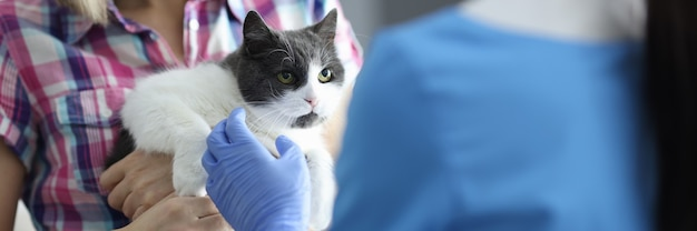猫は獣医の予約のクローズアップに連れて行かれました